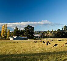 Alpaca farm by Belinda Osgood