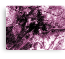 Study in Light and Dark – A Canopy of Branches in Pink  Canvas Print