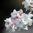 Spring Joy by Rachael Taylor