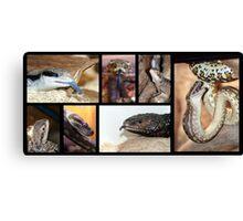 Magie's Reptiles Canvas Print