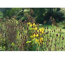 A Brush with Rushes Photographic Print