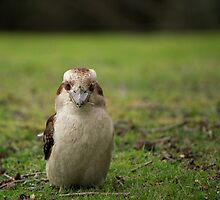 What are you looking at? by Jarrod Calati