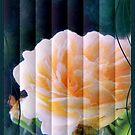 rose card by cynthiab