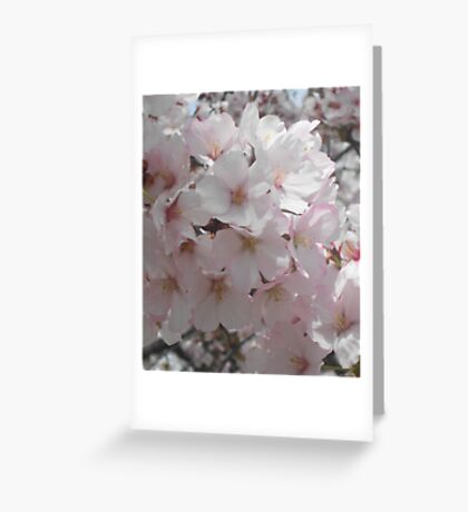 Cherry Bloom Greeting Card
