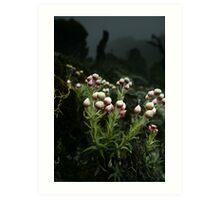 Wild Flowers, Kilimanjaro, Tanzania Art Print