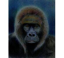 Mighty Gorilla Photographic Print