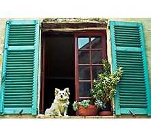 How much is that dog at the window ? Photographic Print