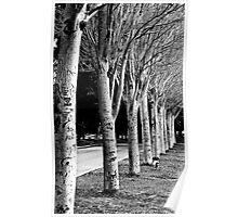 Graffiti Trees Poster