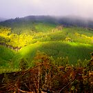 Otway National Park in hdr by Elana Bailey
