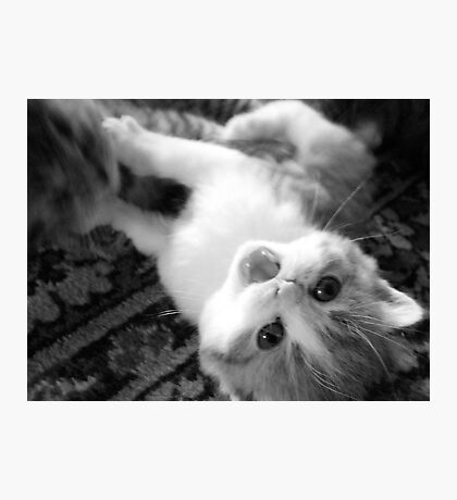 Cat fight... Photographic Print