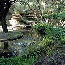 Sunken Garden, University of Western Australia by Adrian Paul