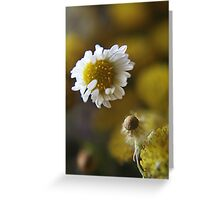 White light (from wild flowers collection) Greeting Card