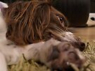 It's A Dog's Life... by Ryan Davison Crisp