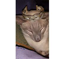 Gabriel Siamese Cat Crown Photographic Print