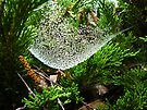 Jeweled Web  by Barbara Burkhardt