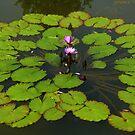 The Water Garden ~  Part Five by artisandelimage