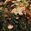 Rain Forest Shrooms by Karen Karl
