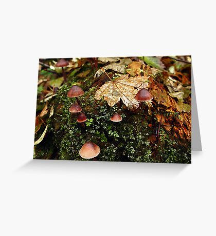 Rain Forest Shrooms Greeting Card