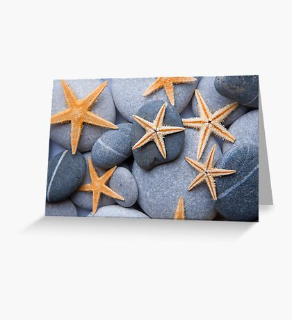 Starfish on a Pebble Beach Greeting Card
