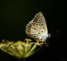 Una farfalla nel bosco by Andrea Rapisarda