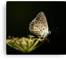 Una farfalla nel bosco Canvas Print