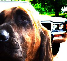 Dog & Car by JordanK