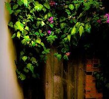 Secret door by Pat Shawyer