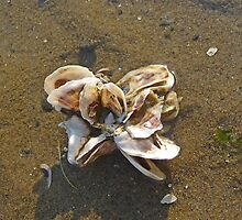 Shell Formations by Margie Avellino