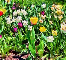 Spring colours - painted by PhotosByHealy