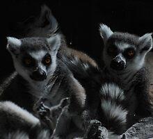 Lemur by Karen Harding