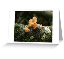 Brown Fungi or lichen Greeting Card