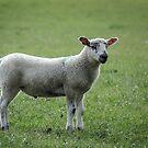 Lamb by JEZ22