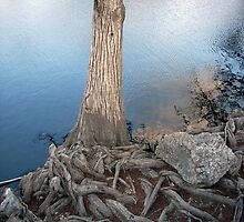 Blue Roots by skybluesky