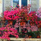 Balcony Garden by jules572