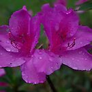 Purple Flower by mrfriendly