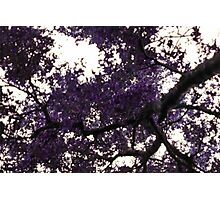Purple in the Sky Photographic Print