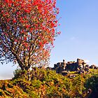 Dartmoor Hound Tor by David-J