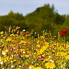 Wildflower panorama by Michael Hadfield