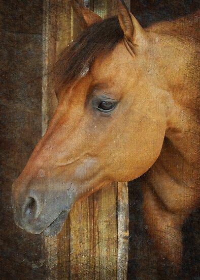 Curious by Johanne Brunet