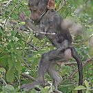 Baby Baboon Adventuring, Arusha NP, Tanzania, Africa (Y) by Adrian Paul
