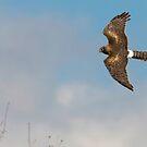 Aerial Acrobat by David Friederich