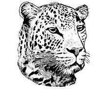 Big Five - Leopard Photographic Print