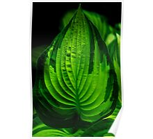 Leafy Sunlight Poster