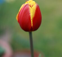 Spring's Promise by Jodi Turner