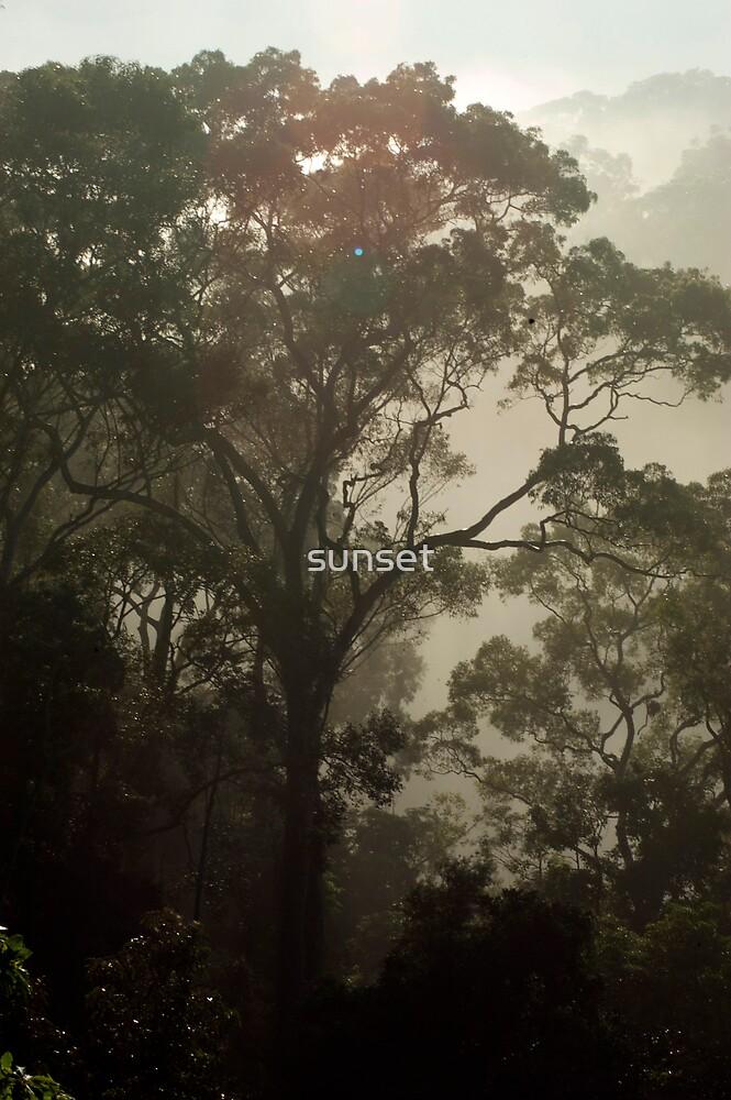 misty morning - tree by sunset