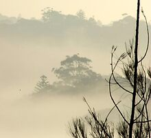 misty morning - tree top by sunset
