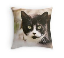 Tuxedo Feral Cat  Throw Pillow