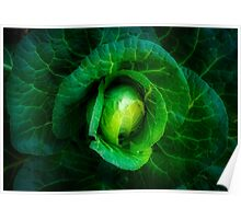 Cabbage with a healthy glow Poster