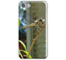 Great Blue Skimmer dragonfly (female) iPhone Case/Skin