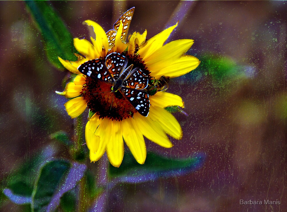 Butterfly Dreams by Barbara Manis